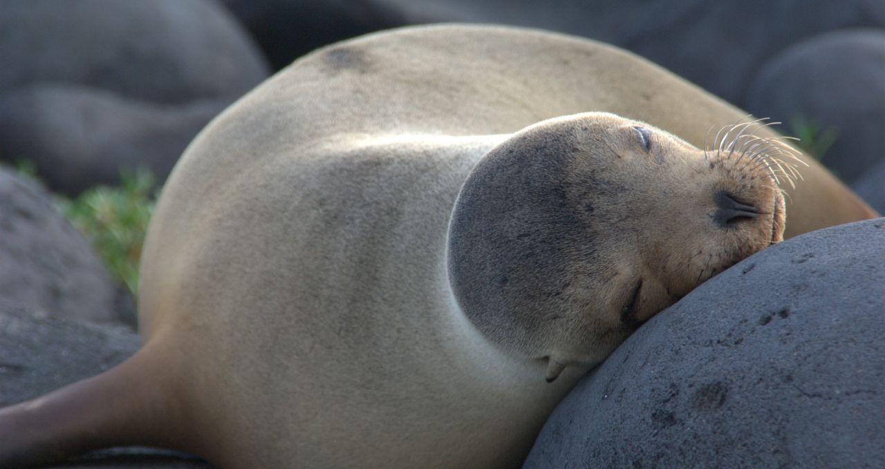 sea lion -siesta-in-galapagos