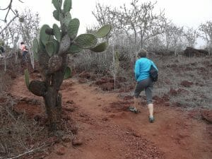tourists on trails Galapagos