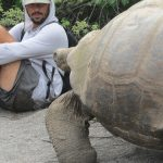 Giant male tortoise and person, Urbina Bay, Galapagos