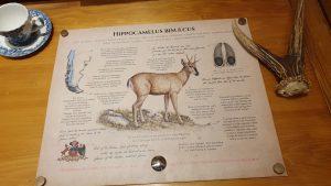 Huemul information board, Patagonia Park Museum, Aysen Region, Chile